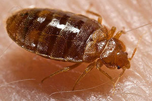 Pest Control Removal New York City Bed Bugs Removal
