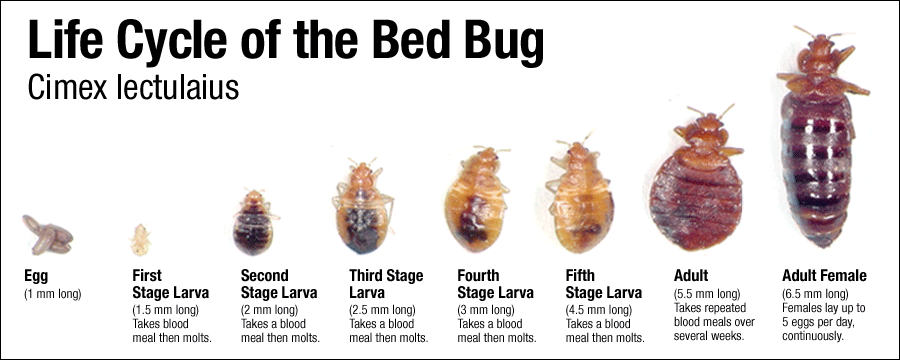 Nyc Bed Bug Exterminators Bed Bug Removal New York City